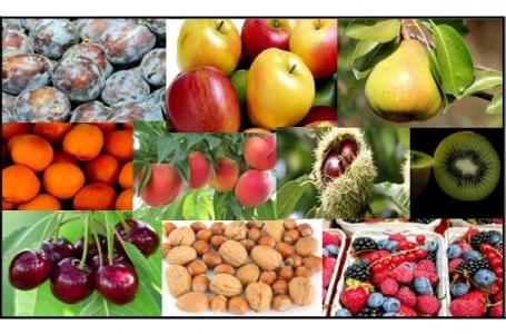 Adaptation des productions fruitières aux Changements Climatiques :