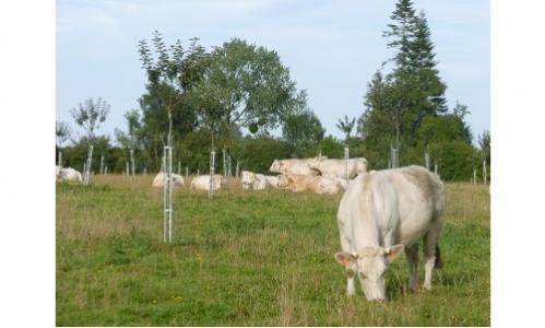 Appel à témoignage sur l'association animal-végétal en arboriculture