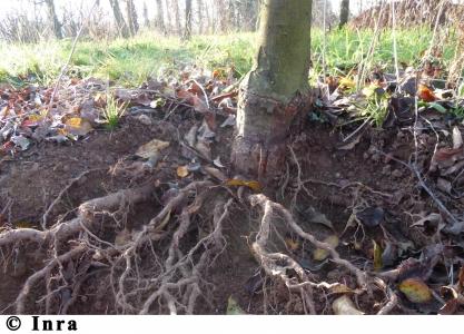 Journée d'échange sur la valorisation des sols de vergers