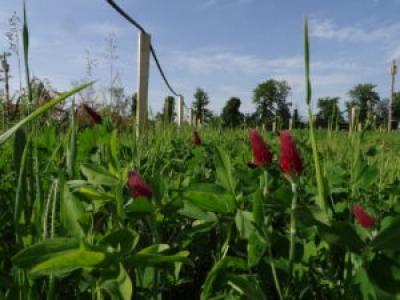 Journée technique engrais verts en arbo bio