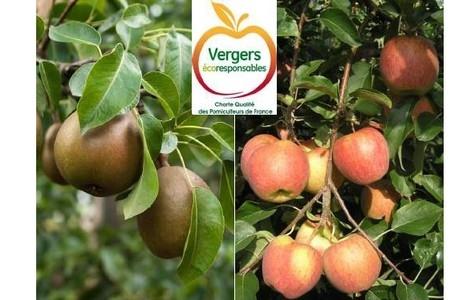Journée technique Pomme Poire