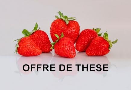 Le Ciref et l'INRA de Bordeaux proposent une thèse Cifre en sélection du fraisier