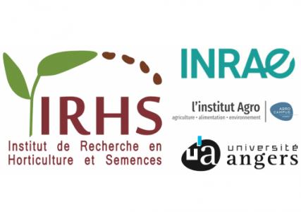 Offre de thèse à l'IRHS