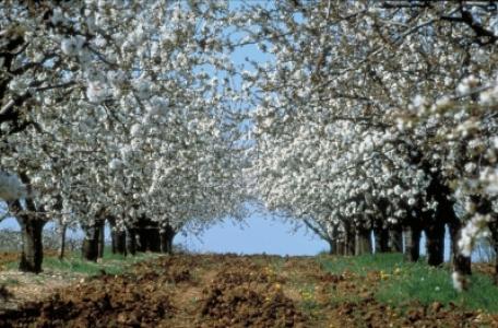 Recrutement CDD ingénieur en agronomie des systèmes de culture fruitiers