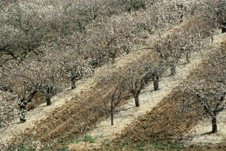 Résultats préliminaires de l'enquête du GIS Fruits sur les sols de vergers