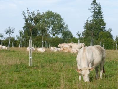 Projet REVE Reconnexion élevage et végétal (2020-2021)